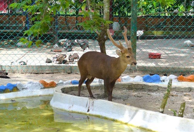 Langkawi-wildlife-park-15-2.jpg