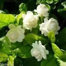 FB_IMG_1610964529329.jpg